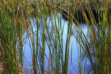 Pond, Florida