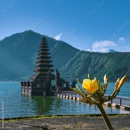 A beautiful yellow flower with a temple in the background