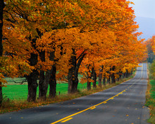 This Is An Autumn Road In New England. There Are Fall Leaves On The Trees That Line The Road That Trails Off Into Infinity.