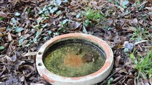 Drinking Bowl For Birds And Animals. Water From A Hose Pours And Fills It With Fresh Water.