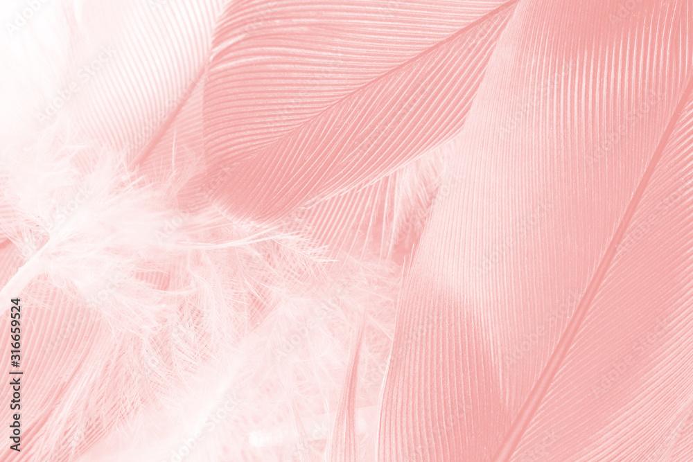 Fototapeta Beautiful soft pink feather wing pattern texture background