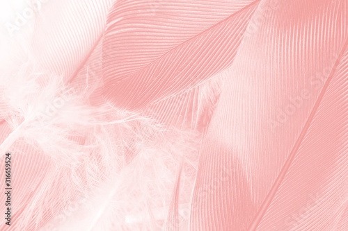 Beautiful soft pink feather wing pattern texture background