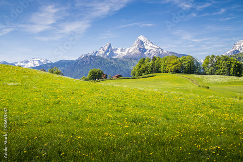 Idyllic landscape in the Alps with blooming meadows and snowcapped mountain peaks in springtime #316663532