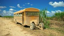 Sugarcane Harvest, Old School ...