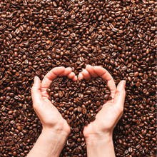 Roasted Coffee Beans In Hands....