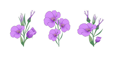 Branches of eustoma. Close-up. Set. Color images of eustoma branches. Design element. Vector image.