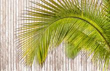 Palm Leaf On Wood Background
