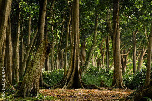 Tropical Forest on Havelock Island, Andaman and Nicobar Islands, India Canvas-taulu