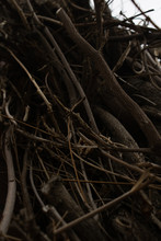 Braches And Roots Of A Tree