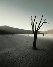 Dead Trees In Arid Landscape