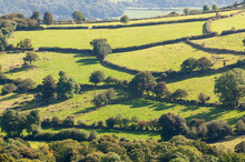 Scenic View Of Rolling Green English Patchwork Countryside Landscape In Devon, UK