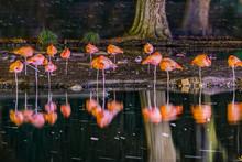 Flamingos By Night Sleeping At The Lake