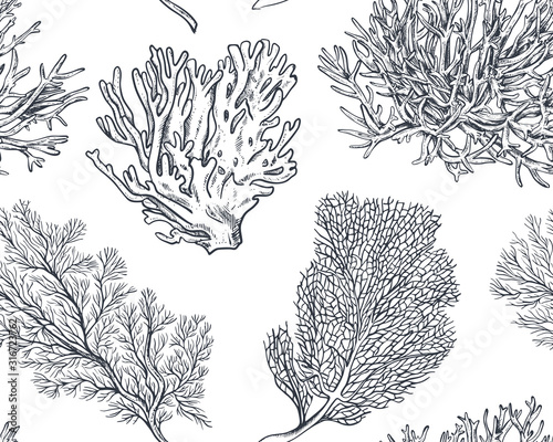 Fotografía Vector seamless pattern with hand drawn ocean plants and coral reef elements in sketch style
