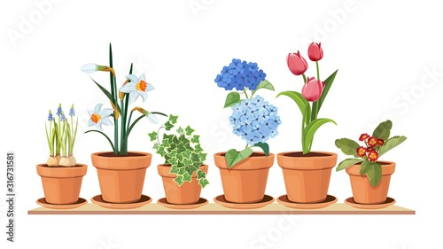 Obraz Spring flowers. Floral decorative interior elements. Isolated tulips in pot, houseplant on shelf vector illustration. Interior bloom flower in pot, floral tulip gardening - fototapety do salonu