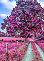 Panel Szklany Krajobraz Beautiful purple infrared landscape with fields and trees