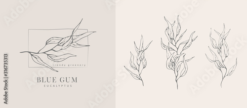 Obraz Eucalyptus blue gum logo and branch. Hand drawn wedding herb, plant and monogram with elegant leaves for invitation save the date card design. Botanical rustic trendy greenery - fototapety do salonu