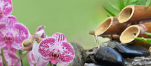 Pink Orchid And Bamboo Fountain In Green Background