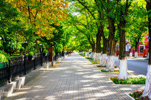 The Acacia Alley In The Autumn Park. Bright Sunny Day. The Concept Of The Autumn Holiday