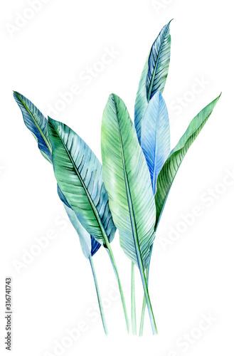 Fototapeta Bukiety akwarelowe z roślinami tropikalnymi