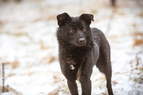 Photo  Beautiful black fluffy dog. Homeless dog on the street.