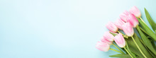Banner With Bouquet Of Pink Tulips On Blue Background. Top View On Tender Spring Flowers.
