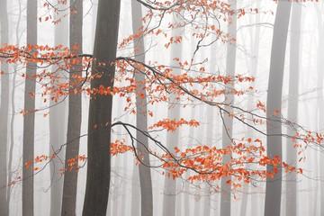 Panel Szklany Podświetlane Inspiracje na jesień Bare trees in winter forest with haze