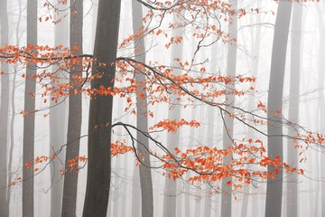 Fototapeta Inspiracje na jesień Bare trees in winter forest with haze