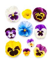 Spring Viola Pansy Flowers Com...