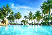 Beautiful Lush Tropical Palm T...