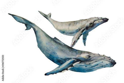 Photo Whales big humpback with baby cub whale watercolor art illustration on white bac