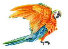 Yellow Parrot On An Isolated White Background, Watercolor Drawing, Tropical Birds