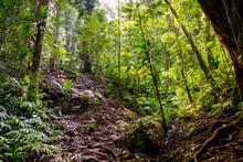 Randonnée Cascade Saut De La