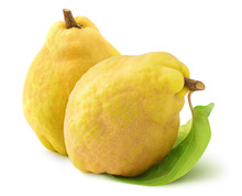 Isolated Quinces. Two Raw Quin...