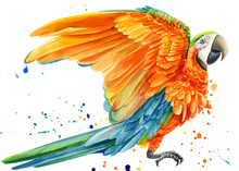 Yellow Parrot And Paint Splash...