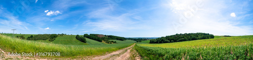 Obraz Rural road and field , spring fresh green grass and blue sky, panoramic landscape - fototapety do salonu