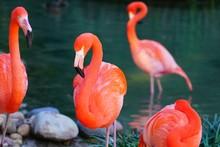 Head Of A Pink Flamingo Birds ...