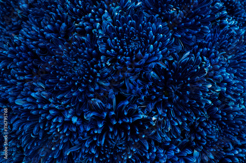 Blue flowers close up for background or texture. Canvas Print