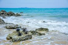 Sea Urchin On Rock Near Ocean ...
