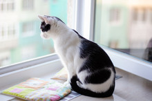 Bicolor Cat Watching At People...