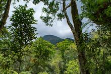 Mossman River And Lookout In Rural Rainforest At Mossman Gorge National Park Daintree Region Queensland Australia.