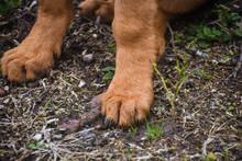 Closeup Of A Dog Pow And Dog S...