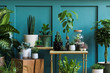 Leinwandbild Motiv Modern composition of home garden filled a lot of beautiful plants, cacti, succulents, air plant in different design pots. Stylish botany interior. Green wall paneling. Template Home gardening concept