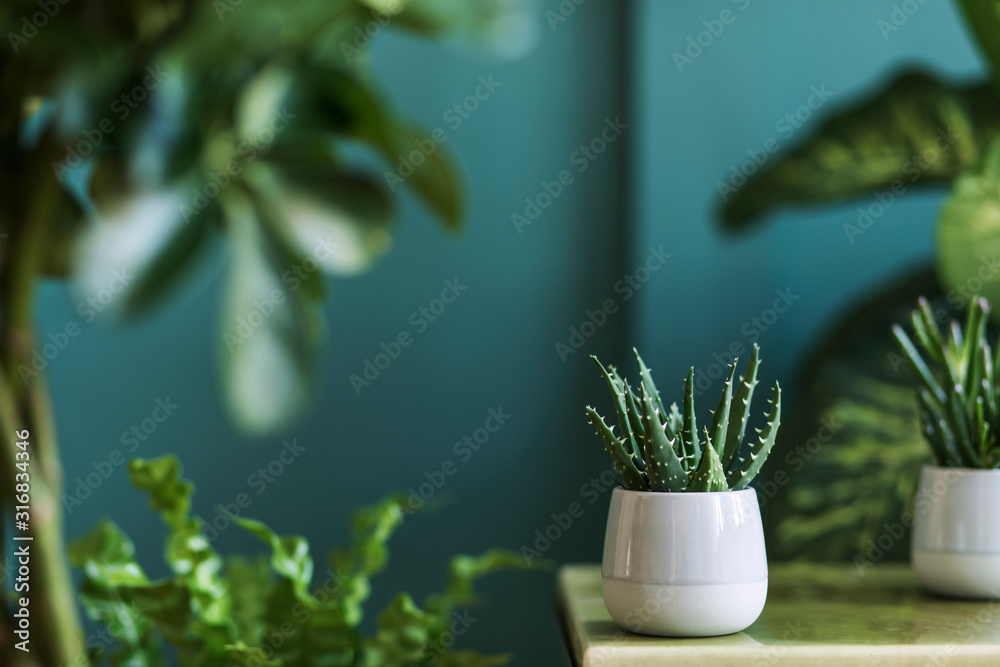 Fototapeta Stylish floral composition with beautiful plants, cacti and succulents in design and hipster pots on the marble coffee table. Natural living room. Green walls. Home gardening concept. Template.