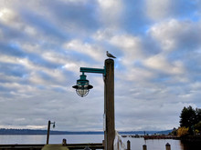 View Of A Lone Sea Gull Perched On Top Of A Lamp Post On The Boat Docks Overlooking Lake Washington