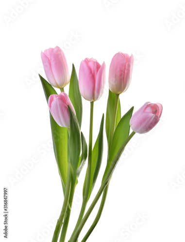 Photo pink tulip flowers isolated without shadow clipping path