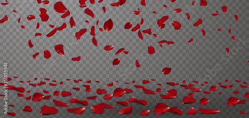 Fototapeta Falling red rose petals seasonal confetti, blossom elements flying isolated. Abstract floral background with beauty roses petal. design for greeting cards on March 8, Women Day, Valentine's Day. obraz