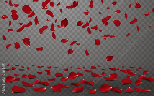 Cuadros en Lienzo Falling red rose petals seasonal confetti, blossom elements flying isolated
