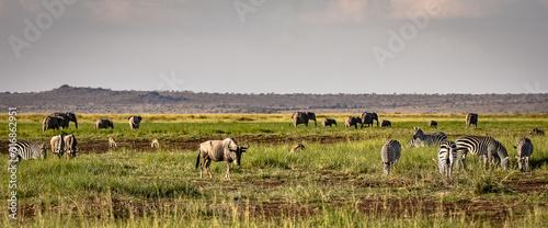 Safari potpourie