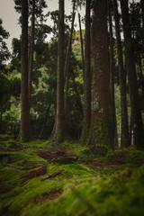 Portugal floresta com árvores e vegetação verde
