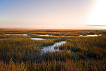 Saltmarsh On The Virginia Coas...